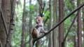 武陵源に住む可愛い猿 74820663