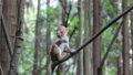 A cute monkey living in Wulingyuan 74820663