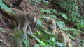 武陵源に住む可愛い猿 74820664