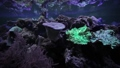 Colored corals on the seabed in the aquarium. 74849636