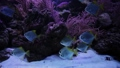 Shiny fish swim at the bottom of the sea. 74849637
