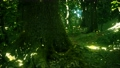 Fantasy firefly lights in the magical forest 74921286