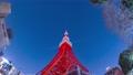 시간 경과 도쿄 타워 일본 전파탑 관광 명소 미나토 구 빨간색 도심 도쿄 밤 고층 빌딩 건물 거대한 74973071