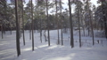 Winter day off in a pine forest in Latvia. Bright people walk in the snow and children sled down the hill. Healthy active holiday on a sunny January day 75055002