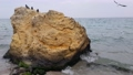 Seascape. The coastline, a large rock on which birds nest. 75060633