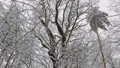 Winter forest during a snowfall, slow motion 75197863