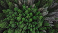 Evergreen Coniferous Forest. Aerial Top View from Above 75418885