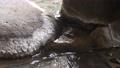 日本溫泉和露天浴池的形象 75492561