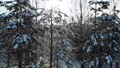 aerial shot flying over winter snow woods video 75507113