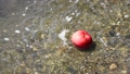 An apple floating in the water near the shore is picked up by a man passing by 75518914