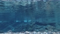 Underwater video of the Maruhara River in Yamagata City, Gifu Prefecture 75670001