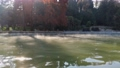 pool of steaming hot water in a magical setting of autumn grove trees with sunlight against the 75692551