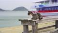 相島のネコ 75696765