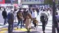 도쿄의 도시 풍경 시부야 스크램블 교차로를 오가는 사람들 75730827