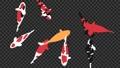 鯉魚循環動畫 75775777
