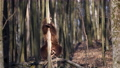 Adult brown bear in the spring forest peels the bark from a tree 75776804