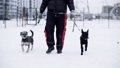 Man holding leashes and walking with two dogs in snow 75840492