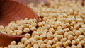 Soybeans in a bag, Ready-made raw seed material, Natural organic protein product, Meat substitute 75904323