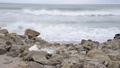 海塑料垃圾 75943433