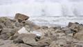 海塑料垃圾 75945044