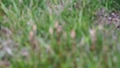 horsetail, vegetation, vegetative 75955563