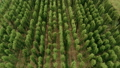 Aerial Agricultural Landscape with Humulus Hop Cultivation for Beer Brewing 75977339