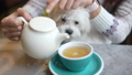 Cute dog drinks from a mug in cafe 75989789
