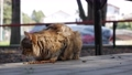 Hungry homeless striped cat eatsdry food outside. Concept of stray animals 76092286