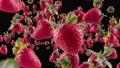 Burst of Strawberry in Black Background 76099594
