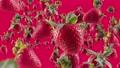 Burst of Strawberry in Fuchsia Background 76099596