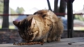 Hungry homeless striped cat eatsdry food outside. Concept of stray animals 76108106