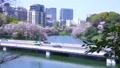 春の東京の都市風景 北の丸公園から眺める千鳥ヶ淵の桜吹雪と首都高速 76122673