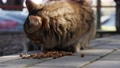 Hungry homeless striped cat eatsdry food outside. Concept of stray animals 76142578