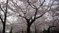Akashi Castle 76175942
