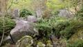 環境藝術森林 76199010
