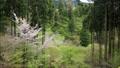 環境藝術森林 76199012