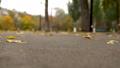 The wind rises autumn yellow leaves from the asphalt in the park. Slow motion. 76292488