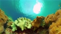 Coral reef and tropical fish underwater. Philippines. 76292812