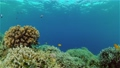 Coral reef and tropical fish underwater. Philippines. 76292814