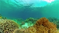 The underwater world of a coral reef. Philippines. 76292818