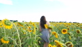 Beautiful carefree woman walking among high blooming sunflowers showing joyful emotions. Young happy girl going through field enjoying freedom or nature. Scenic summer landscape at background 76303584