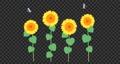 向日葵 花朵 花 76307348