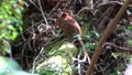 undeveloped woodland near populated area, wild bird, bird 76310363