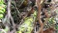 mountain stream, mountain torrent, spring 76310617