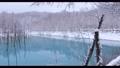 【北海道美瑛町】降雪の青い池 4月 76312854
