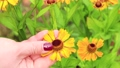 A woman hand gently strokes a flower petal on a flower bed with her finger. 76333251