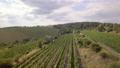 Bird aerial view of Vineyards in Palava Czech Republic 76365587