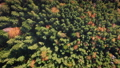 Top down colorful autumn fir forest aerial view. Sun nature background. Green, yellow color trees 76365909