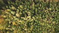 Top down aerial of autumn forest. Nobody nature landscape background. Colorful trees. Yellow foliage 76365916