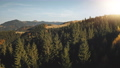 Sun mountain pine forest closeup aerial. Spruce tree at mount ridge. Nobody nature landscape. Autumn 76366530